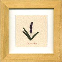 《ハーブ アートフレーム》Lavender(ラベンダー)(ゆうパケット)