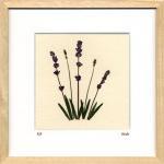 《ハーブ アートフレーム》Lavender(ラベンダー)