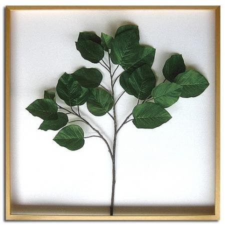 《リーフパネル》Ficus Umbellata(フィカス ウンベラータ)