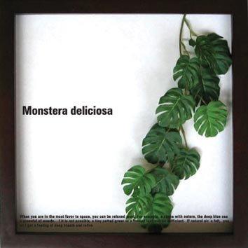 《リーフパネル》Monstera deliciosa(モンステラ デリシオサ)