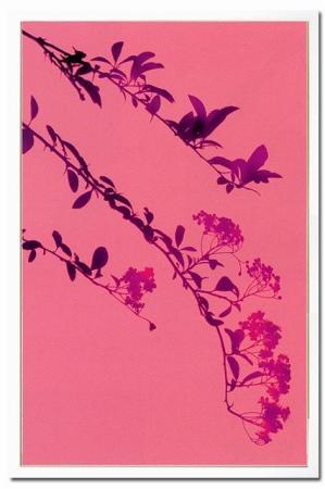 《X-Ray(X線) アートフレーム》Butterfly Blossom(バタフライ ブロッサム) Steven N.Meyers