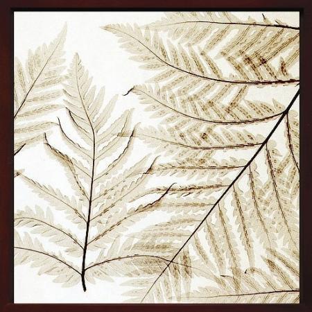 《X-Ray(X線) アートフレーム》Ferns I(シダ) Steven N.Meyers