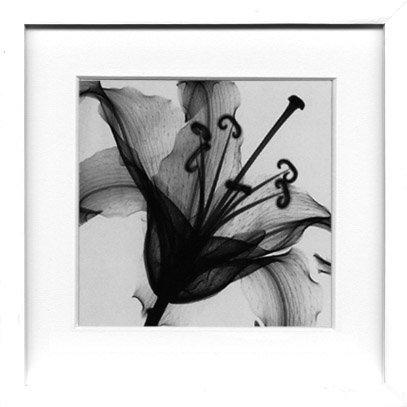 《X-Ray(X線) アートフレーム》Lily Muscadet(リリー ミュスカデ) Steven N.Meyers