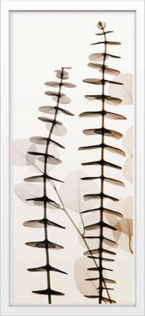 《X-Ray(X線) アートフレーム》Eucalypti I(ユーカリ) Steven N.Meyers