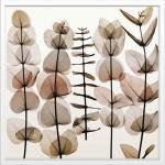 《X-Ray(X線) アートフレーム》Eucalypti II(ユーカリ) Steven N.Meyers