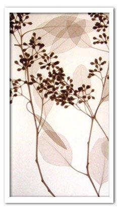 《X-Ray(X線) アートフレーム》Eucalyptus III(ユーカリ) Steven N.Meyers