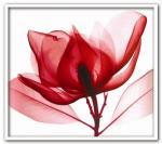《X-Ray(X線) アートフレーム》Red Magnolia(レッド マグノリア) Steven N.Meyers