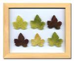 《プラント アートフレーム》Grape Leaf(グレープリーフ)