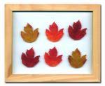 《プラント アートフレーム》Maple Leaf(メープルリーフ)
