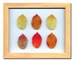 《プラント アートフレーム》Birch Leaf(バーチリーフ)
