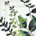 【コースター】ヴェルト デコル 〜テーブルウェア シリーズ〜 「コースター2枚セット(ネイチャー グリーンB)」ゆうパケット