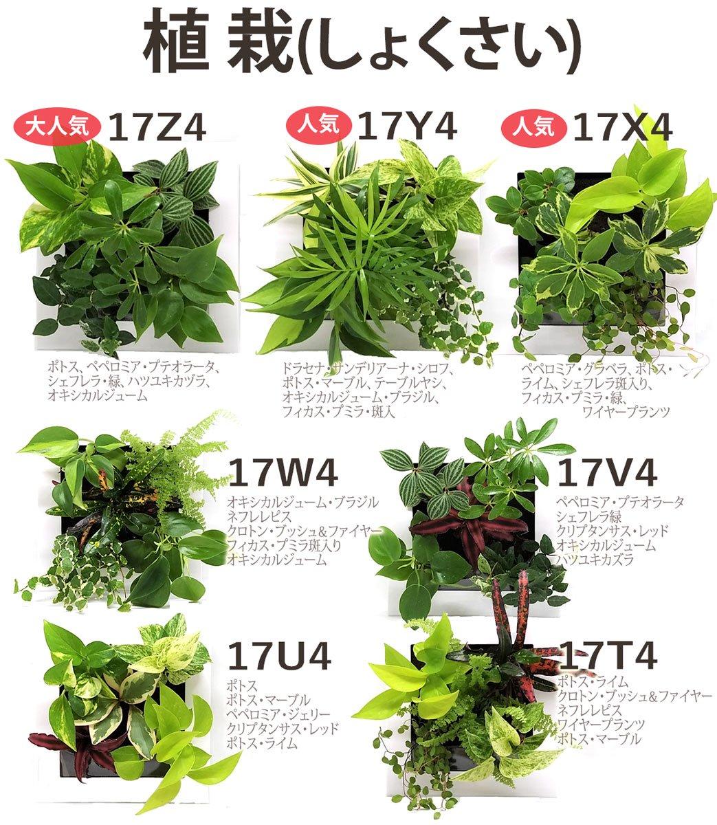 壁掛け観葉植物「ミドリエ」(壁面緑化) 〜サントリー・トヨタの新提案〜 絵を飾るようにみどりを飾る