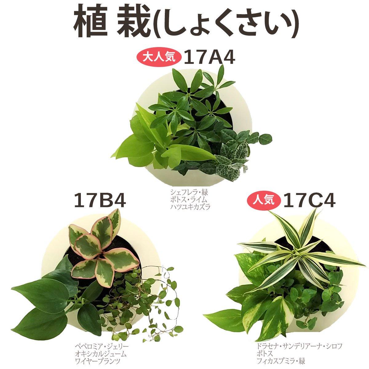 壁掛け観葉植物「ミドリエ」(壁面緑化)ラウンド型木目調グリーンフレーム 〜サントリー・トヨタの新提案〜 絵を飾るようにみどりを飾る
