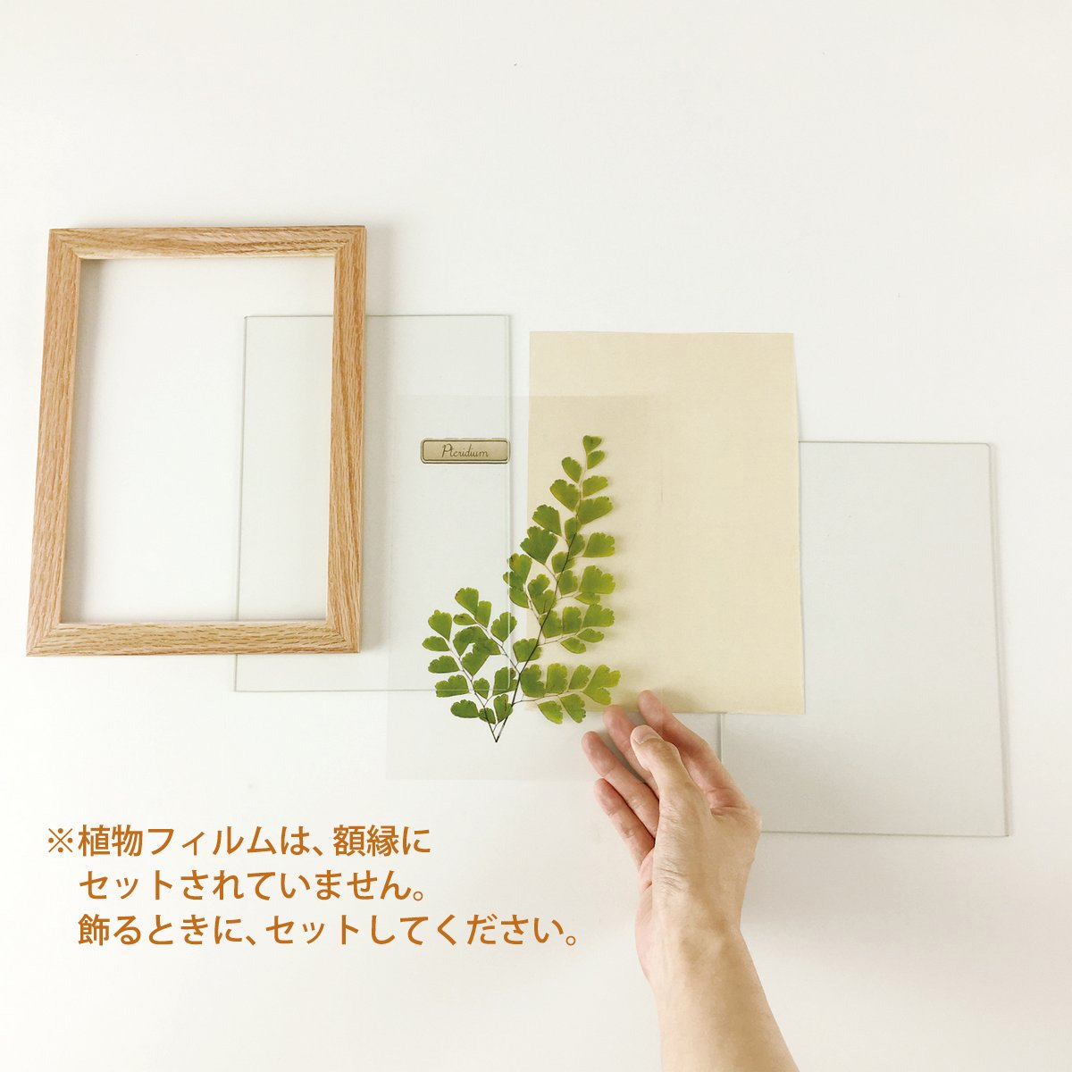 【アートフレーム】ハーバリウムフレーム ポプラ/ナチュラル(壁掛け)