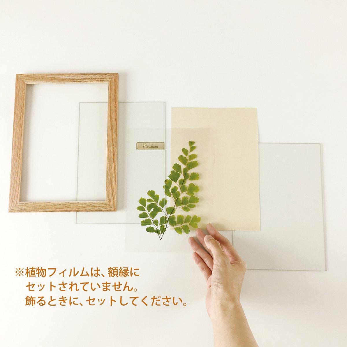 【アートフレーム】ハーバリウムフレーム ハコネシダ/ナチュラル(壁掛け)