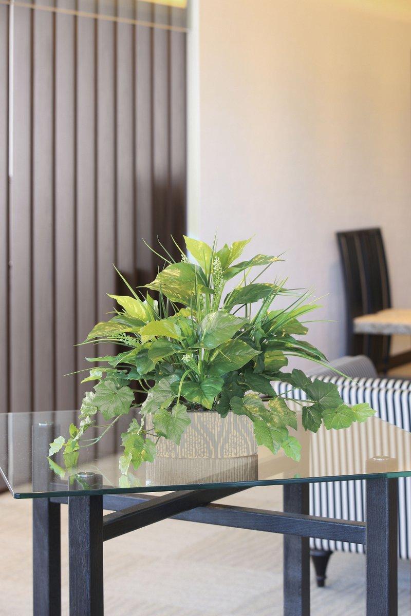 【光触媒観葉植物】フィットニアM(フロック加工)〔フロアタイプ(ミドルサイズ)〕/光触媒 観葉植物 フェイクグリーン 花 開店祝い 開業祝い 誕生祝い 造花 おしゃれ
