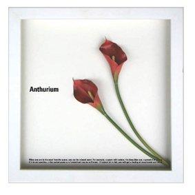 《フラワーフレーム》F-style Frame Anthurium /red II(アンスリウム/レッド2)