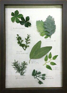 《ハーブフレーム》Musee de herbe Herbe 9(ミュゼ ド エルブ ハーブ9)(ゆうパケット)