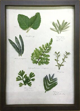 《ハーブフレーム》Musee de herbe Herbe 10(ミュゼ ド エルブ ハーブ10)(ゆうパケット)