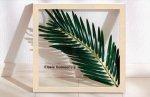 《リーフパネル》Forest Deco Elaeis Guineensis(ギニアアブラヤシ)ホワイトフレーム