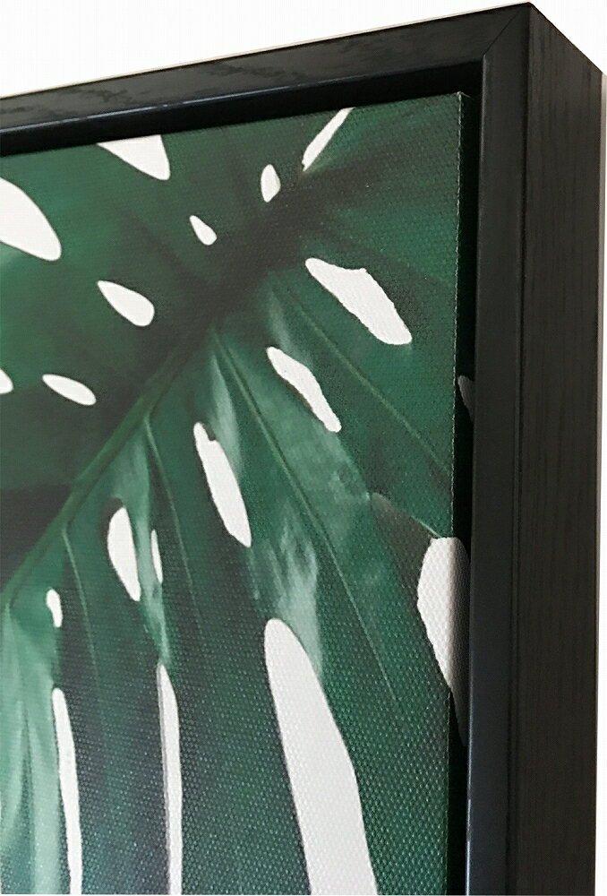 《キャンバスパネル》プラントファイル モンステラ2 (PLANT FILE Monstera 2)