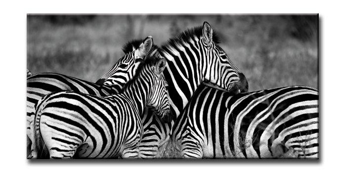 《キャンバスアート》アーバンスタイルM ゼブラ(URBAN STYLE M CANVAS ART Zebra-Mono)