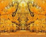 《キャンバスアート》プチキャンバスアート 幸せのイチョウ並木 500x400mm(Petit Canvas Art)