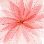 絵画 アートパネル レントゲンフォト 透明な紅葉 壁掛け 飾る キャンバス リビング 玄関 インテリア プレゼント ギフト 植物 葉 おしゃれ 5Lサイズ