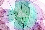 絵画 アートパネル レントゲンフォト マルチカラー デコラティブ スケルトン リーフ 壁掛け 飾る キャンバス リビング 玄関 インテリア プレゼント ギフト 植物 葉 おしゃれ 3Lサイズ
