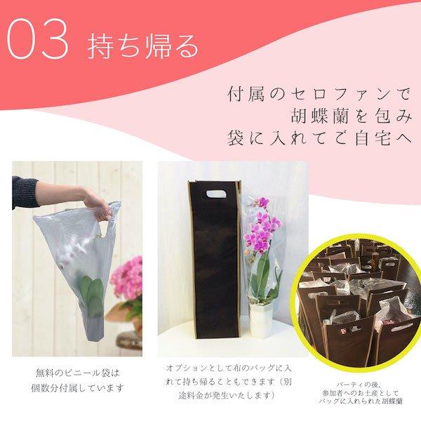 シェアオーキッド シェアできる胡蝶蘭 イエロー 黄色  7本立ち(7株)