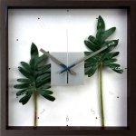 《掛け時計》F-style クロック フィロデンドロン クッカバラ