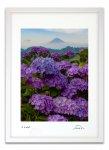 版画 絵画 紫陽花と富士 富士山