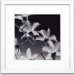 《X-Ray レントゲンフォト》Steven N.Meyers Orchid Denrobium(スティーブン・マイヤーズ 洋らん)