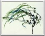 《X-Ray レントゲンフォト》Steven N.Meyers Wind(スティーブン・マイヤーズ 風)