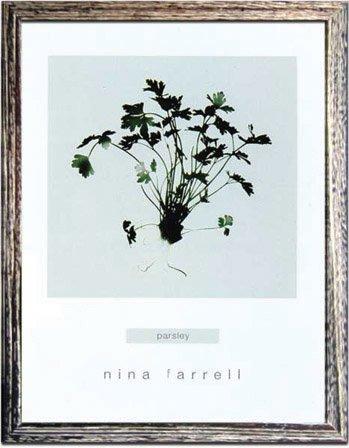 《ハーブ アートフレーム》Nina Farrell Parsley(パセリ)