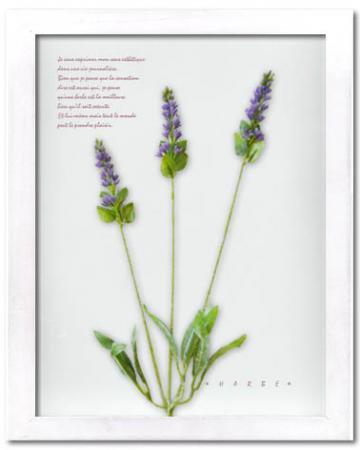 《ハーブ アートフレーム》Herbe frame lavender(ラベンダー)