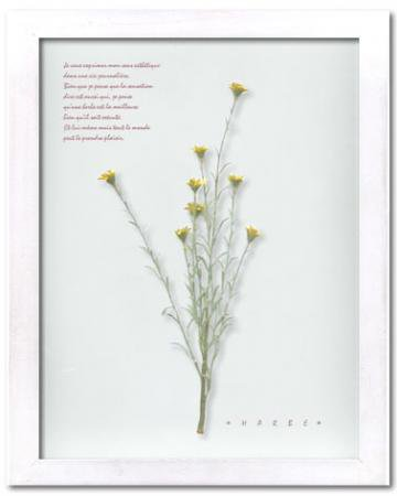 《ハーブ アートフレーム》Herbe frame Wild mini daisy(ワイルド・ミニ・デージー)