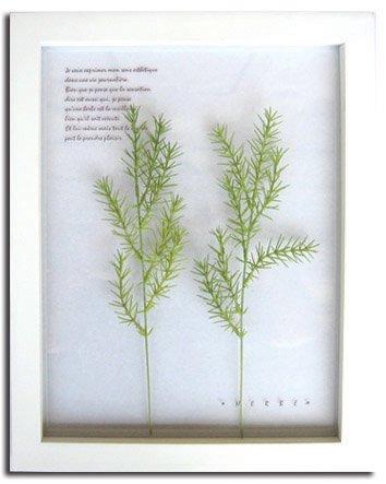 《ハーブ アートフレーム》Herbe frame Asparagus sprengeri(アスパラガス・スプレンゲリー)