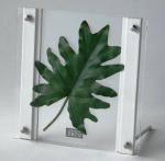 《リーフパネル》SMART GREEN 0101(フィロデンドロン・クッカバラ)