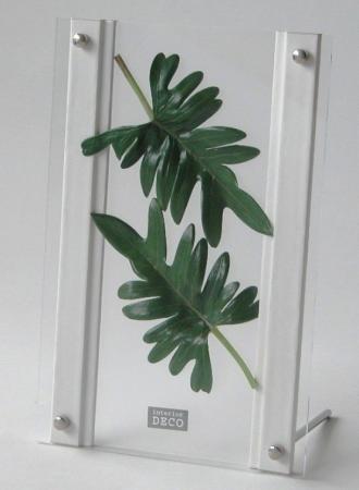 《リーフパネル》SMART GREEN 0105(フィロデンドロン・クッカバラ)