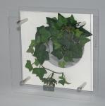《プラントフレーム》HEARTFUL PLANTS 0129(グリーンアイビー)