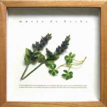《プラントフレーム》musee de herbe(ゆうパケット)
