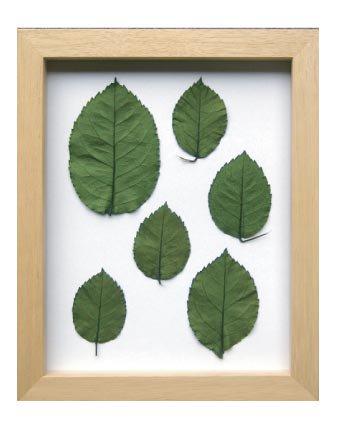 《プラントフレーム》PLANTE Frame Rose leaf(ローズリーフ)(ゆうパケット)