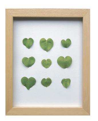 《プラントフレーム》PLANTE Frame Heart leaf(ハートリーフ)(ゆうパケット)