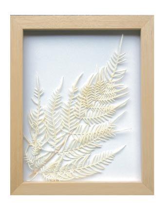 《プラントフレーム》PLANTE Frame Bracken fern(ワラビ)(ゆうパケット)