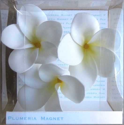《プルメリアマグネット》Plumeria Magnet White