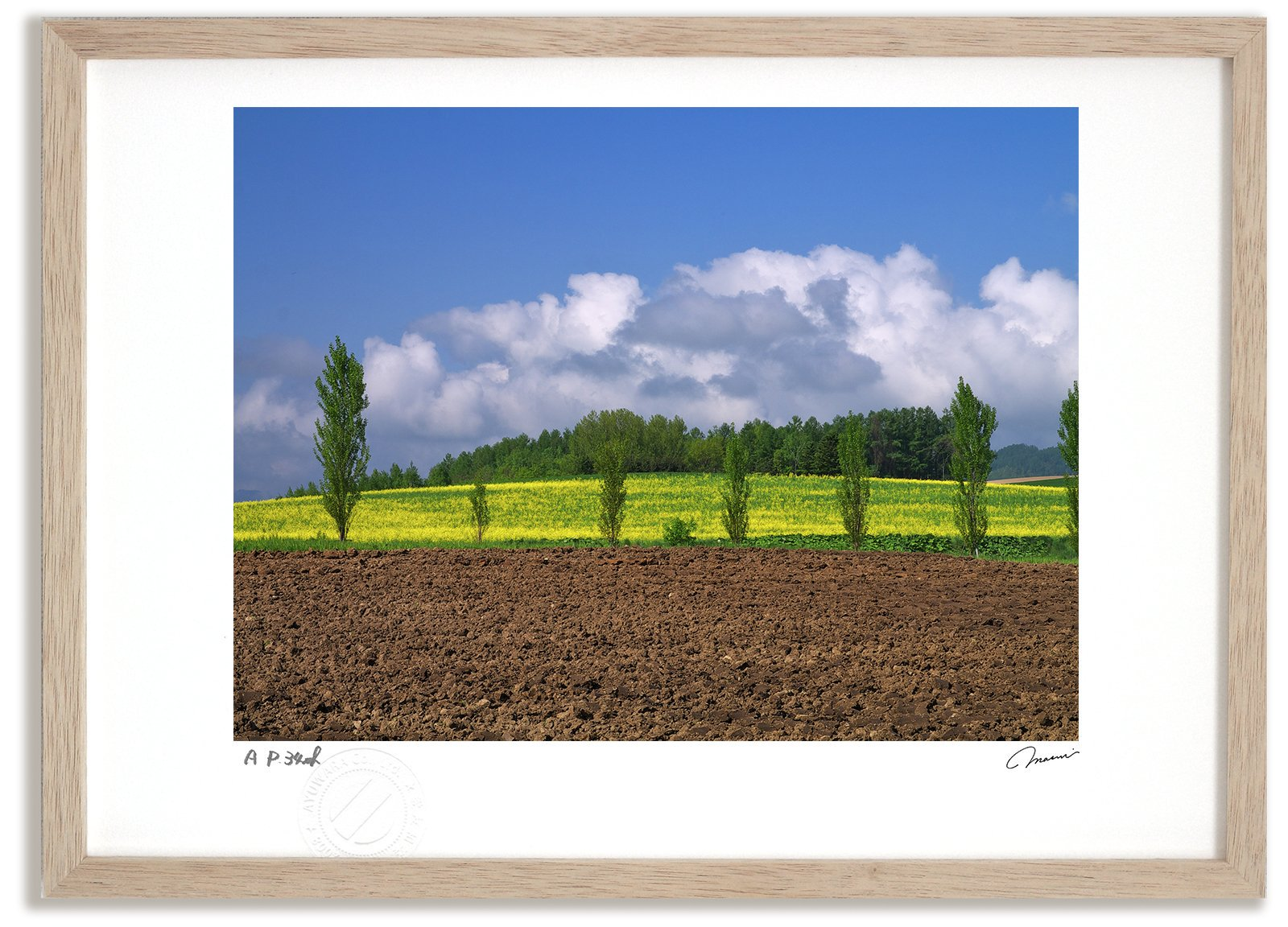 《アートフォト》ポプラとキガラシ畑/上富良野町〔富良野・高橋真澄〕(レンタル対象)