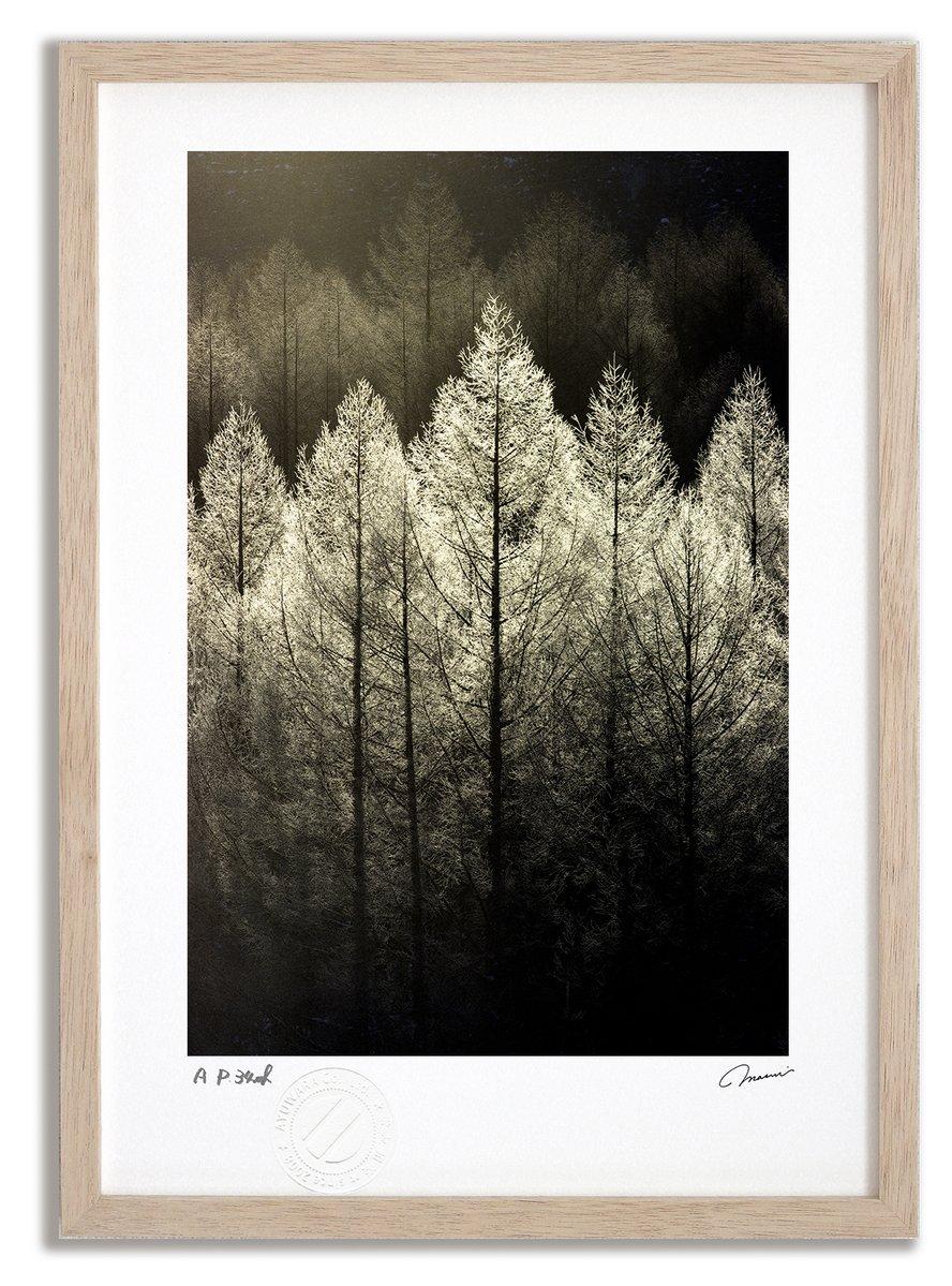 《アートフォト》【ベスト】霧氷の森2/占冠村〔富良野・高橋真澄〕(レンタル対象)