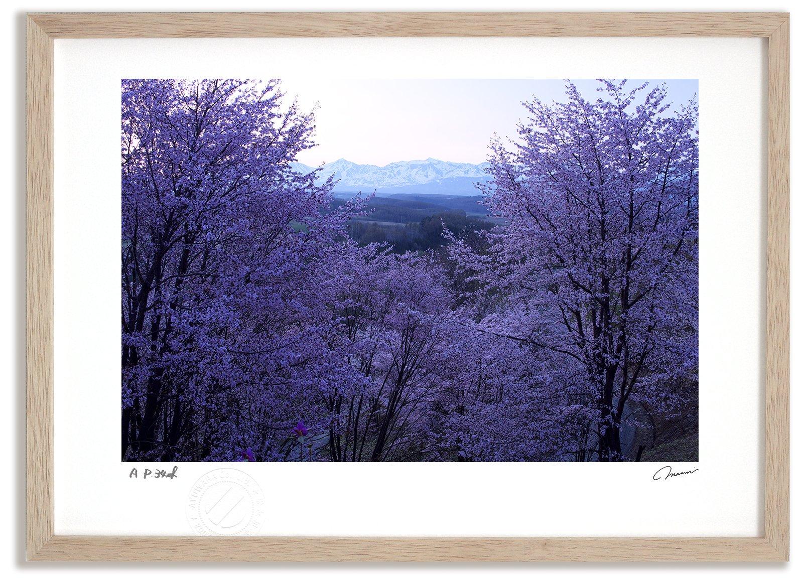 《アートフォト》桜6/上富良野町〔富良野・高橋真澄〕(レンタル対象)