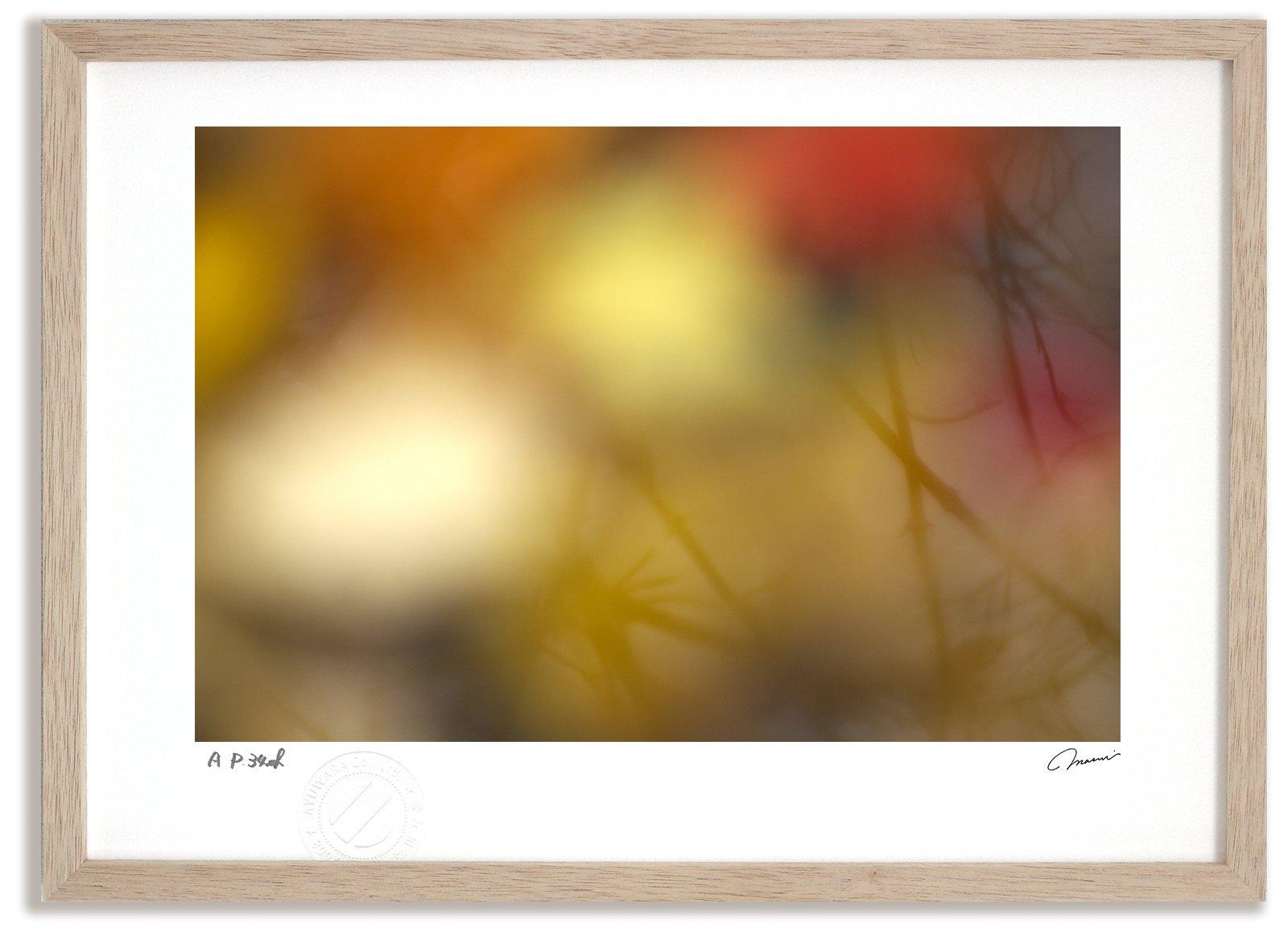 《アートフォト》水面に映る紅葉/富良野市〔富良野・高橋真澄〕(レンタル対象)